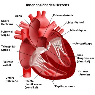 Pumpleistung Herz