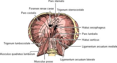 verletzung ligamentum inguinale